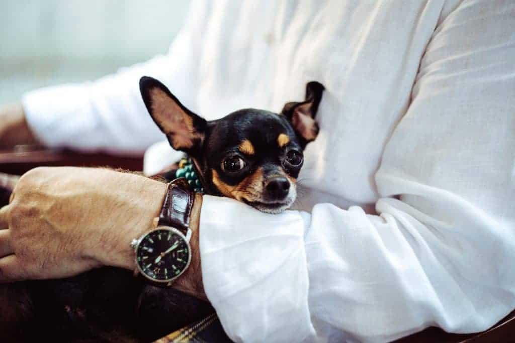 אדם מחבק כלב קטן
