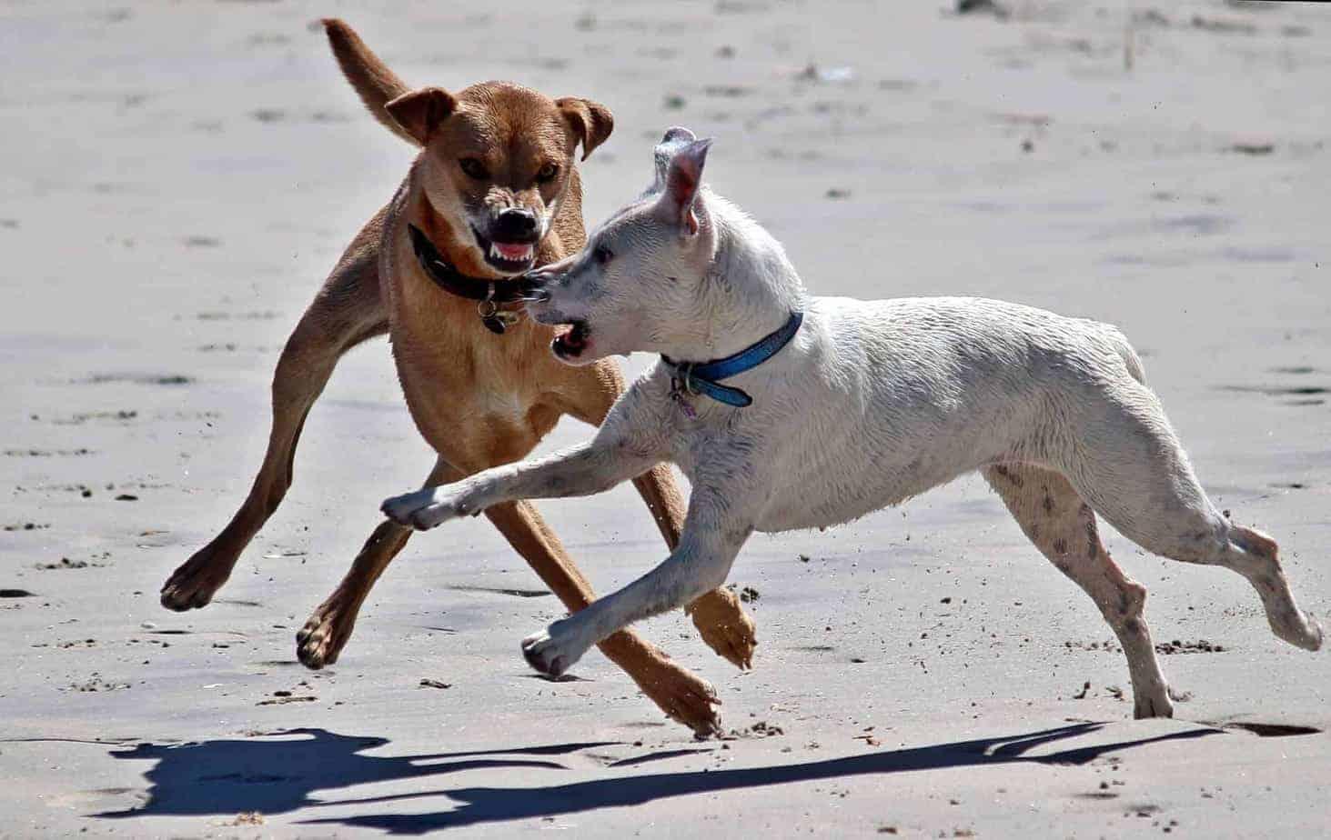 כלב תוקף