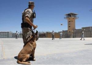 כלב משטרה ומפעיל