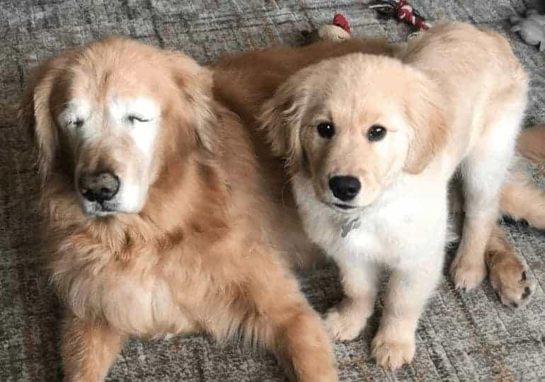 מאווריק (מימין) וצ'רלי העיוור