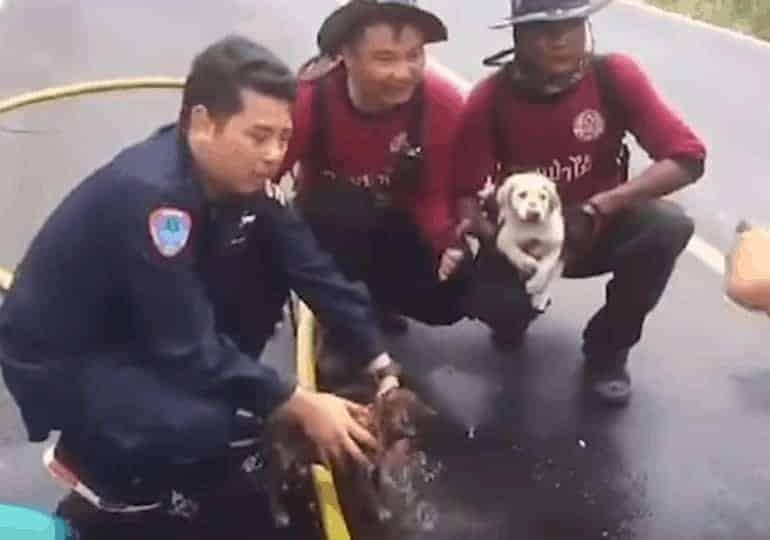 כלבים שחולצו משריפה בתאילנד