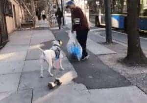 כלב גורר משקולת בקנדה (צילום מסך)