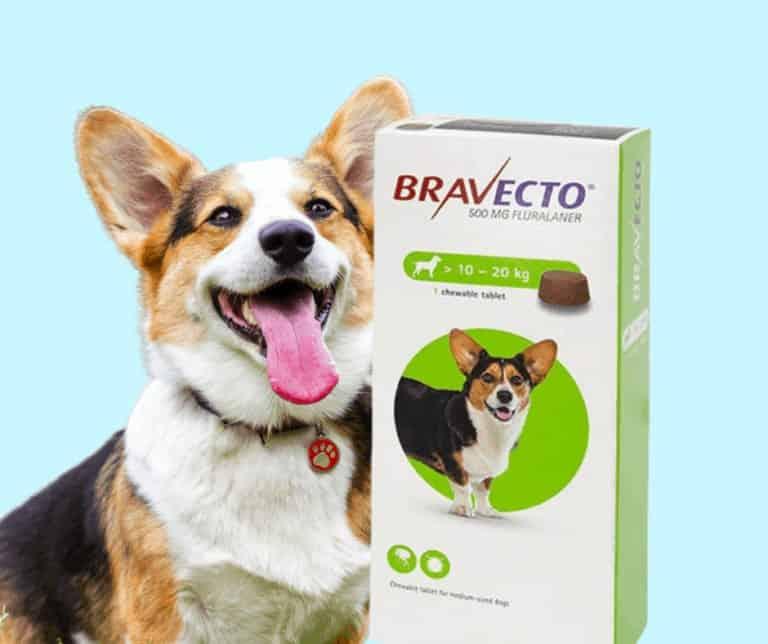 כדור נגד קרציות ברבקטו לכלב מחיר | הטבליה שפרעושים וקרציות מפחדים ממנה