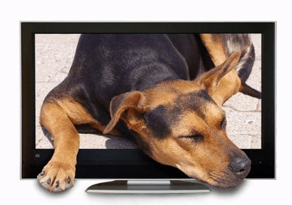כלב יוצא מטלויזיה