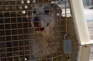 כלב בכלוב (צילום: משרד החקלאות)