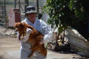 פקחית לוקחת כלב של עמותת גרגורים