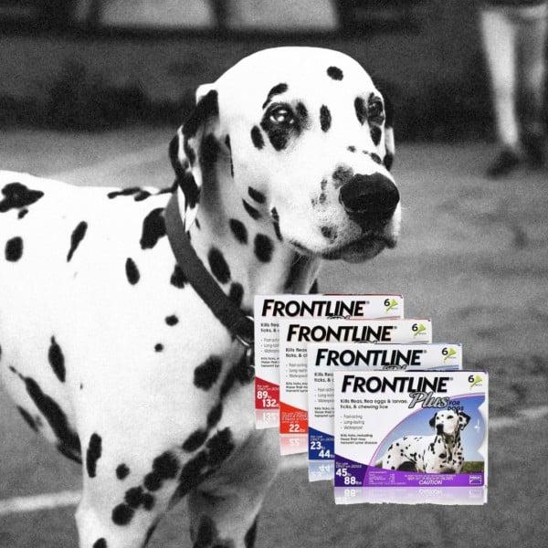 אמפולות פרונטליין לכלבים