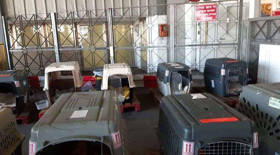 הכנסת הכלובים להטסת 16 הכלבים לקנדה (צילום: פייסבוק)