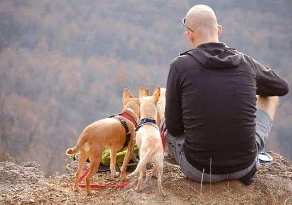 אין כמו טיול עם כלב \\ צילום: Pixabay