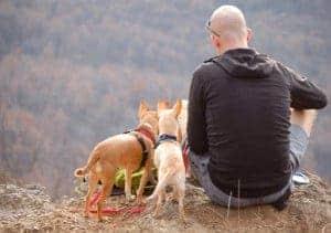 אדם מטייל עם כלבים \\ צילום: Pixabay