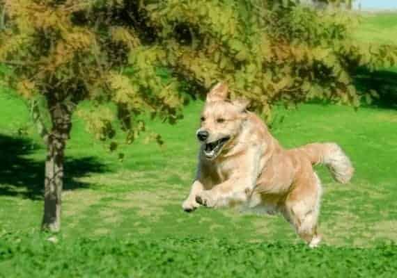 כלב רץ וקופץ בשטח פתוח \\ צילום: יגאל פרדו