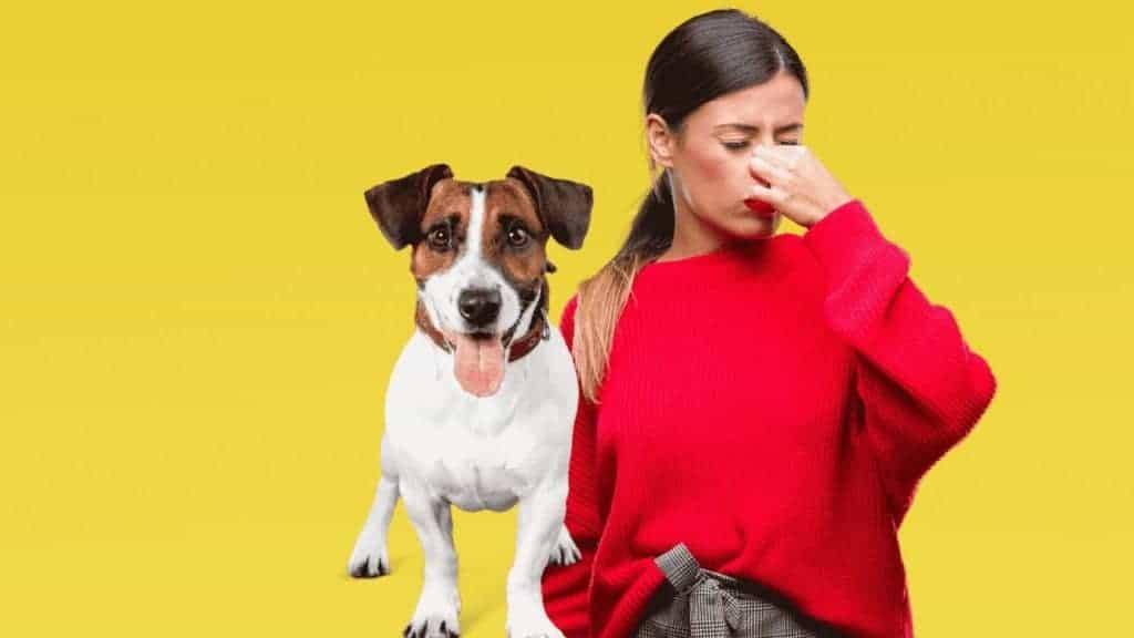כלב מסריח | כך תטפלו בבעיה