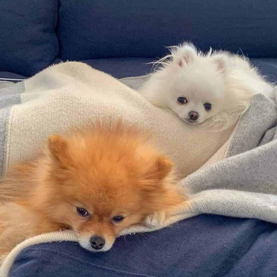 כלבים חמודים: אחת התמונות שמפיצים הנוכלים