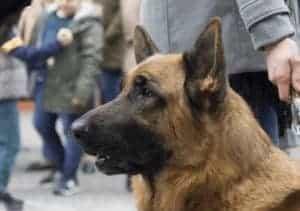 כלב בין הרבה אנשים \\ צילום: Pixabay