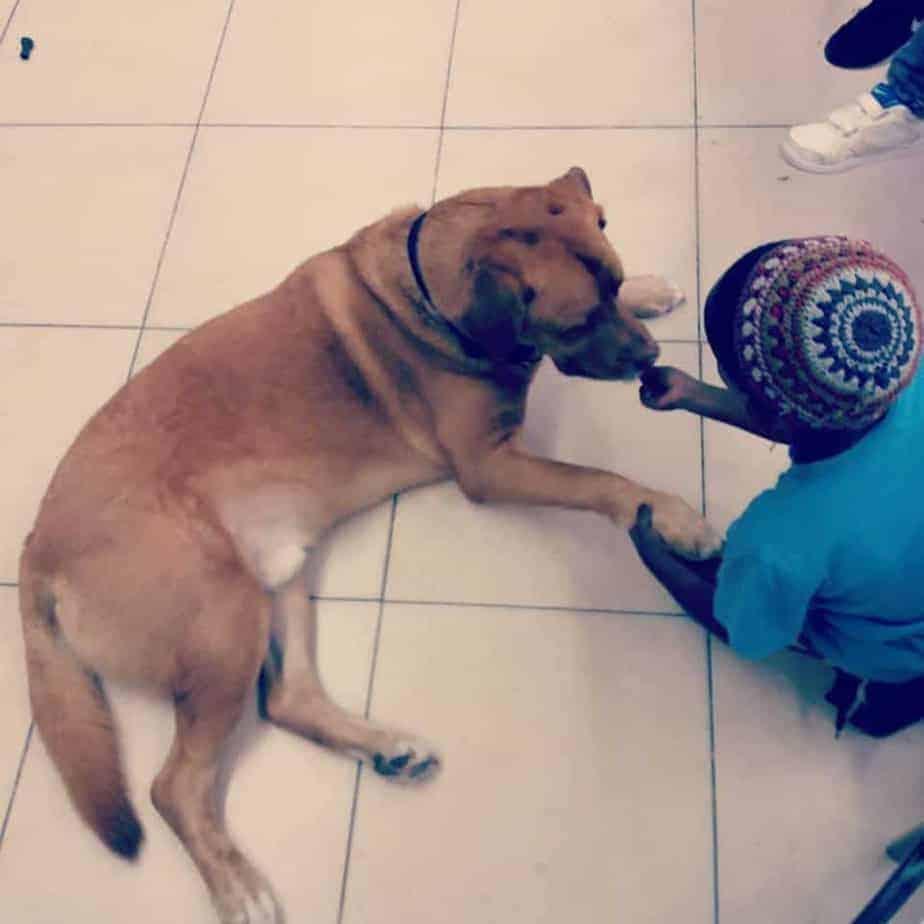 ילד משחק עם כלב בבית הספר \\ צילום: מורים על ארבע