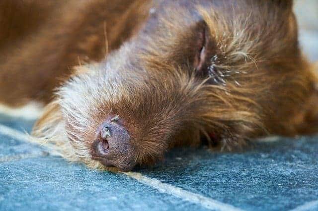 נורבגיה: מחלה מסתורית גבתה את חייהם של עשרות כלבים