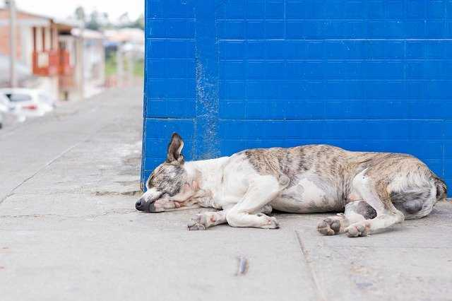 לא רק קורונה: מגפה פגעה במאות כלבים בבריטניה