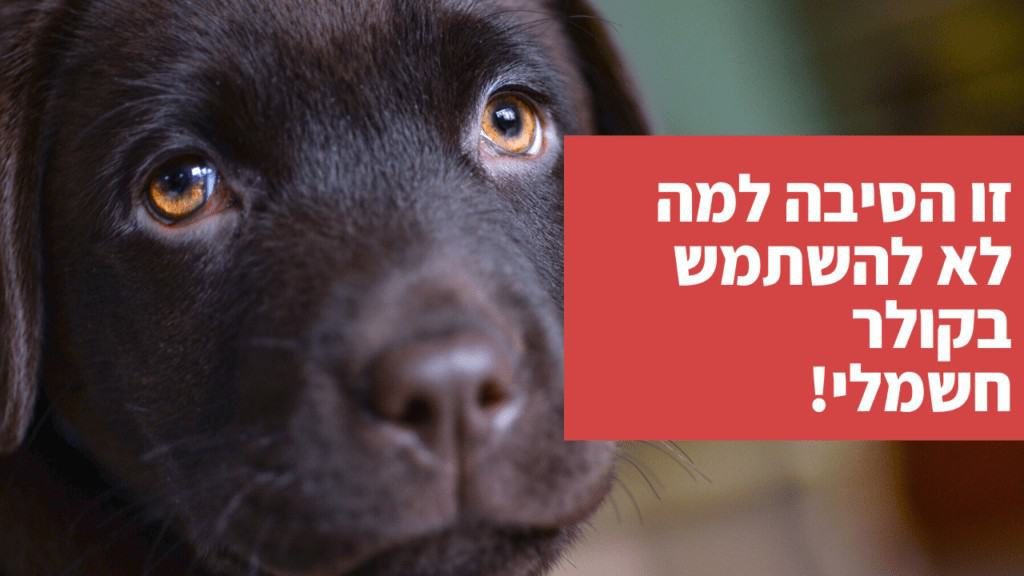 כלב נובח ללא הפסקה - כך תטפלו בזה