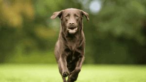 פריקת אנרגיה לכלבים: כך תעשו את זה נכון
