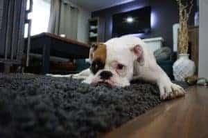 הכלב שלכם מפתח חרדת נטישה בזמן הקורונה?