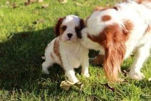 גינות כלבים תל אביב | איפה הגינה הקרובה אלי