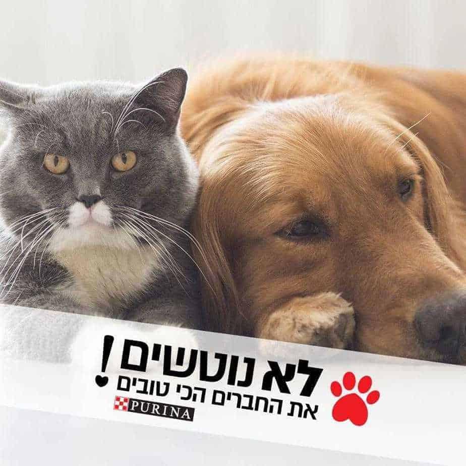 פורינה ישראל בקמפיין נגד נטישות חיות מחמד \ צילום: יחצ