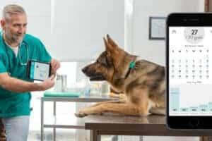 קולר חכם לכלב FitBit