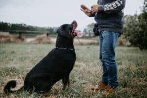 קורס אילוף כלבים דיגיטלי