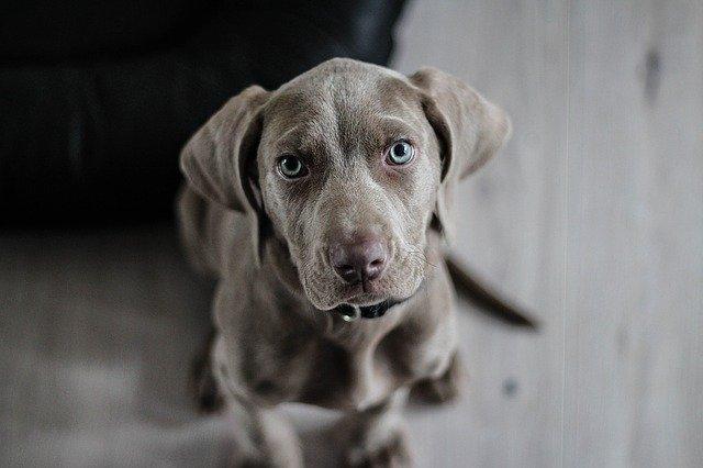 דוגווקר ברמת גן ידאג לכלב שלך