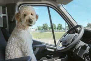 מונית לכלבים | הסעת כלבים