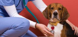 ביטוח בריאות לכלב