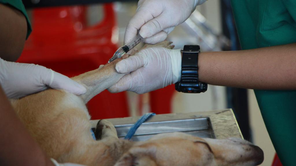 וטרינר מטפל בכלב