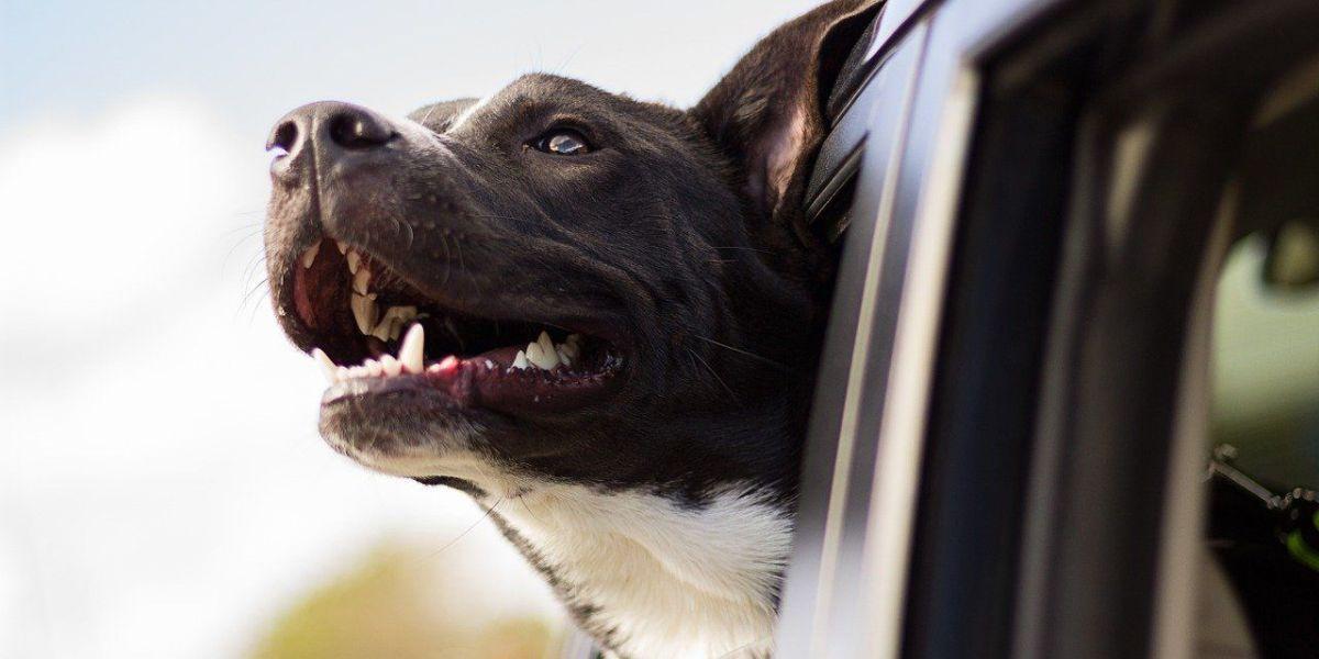 מאלף כלבים מומלץ