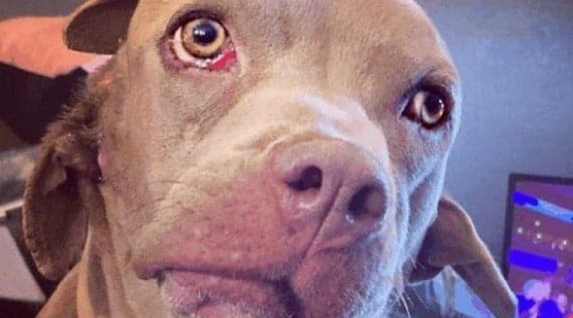 כלבה עם שיניים באוזן