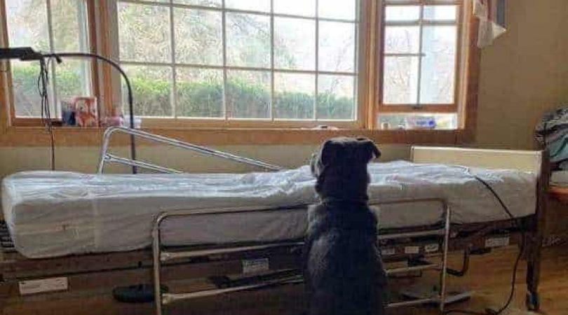 מוס מחכה ליד מיטת בעליו (צילום: פייסבוק)
