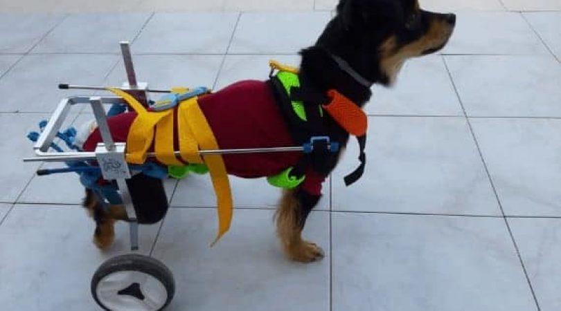 הכלב ג'ון בעגלה