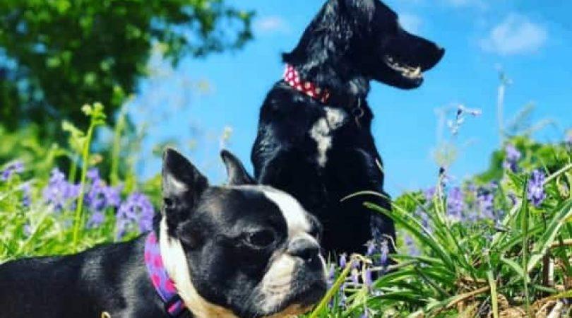 תמונה-של-מגזין-כלבים-24
