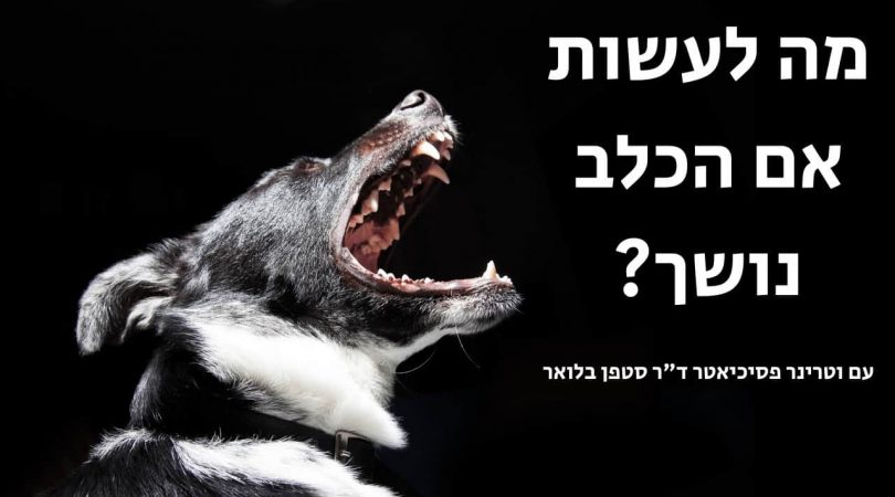 כלב נושך בני אדם