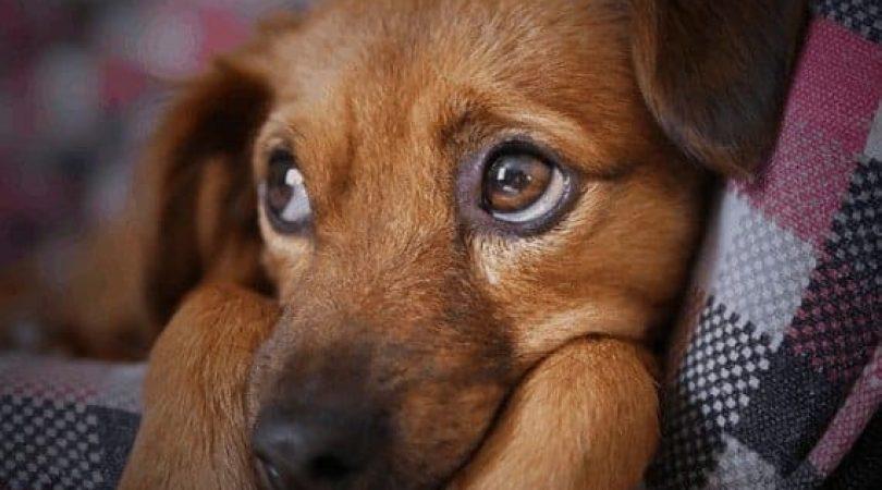 כלב מקיא - מה אפשר לעשות \\ צילום: Pixabay