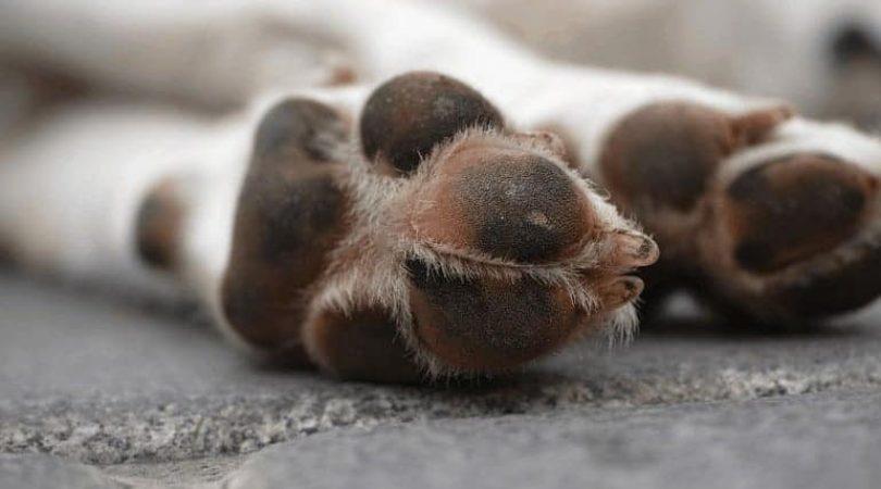 רגליים של כלב שוכב